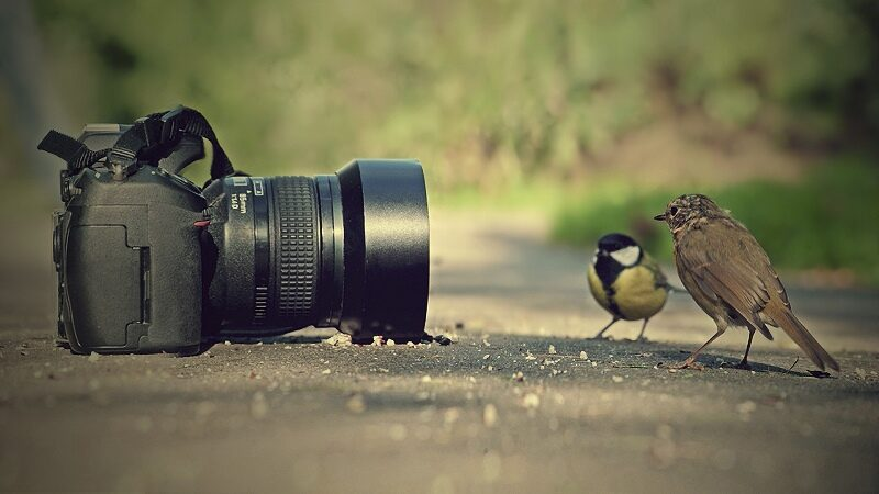 Becoming A Profitable Digital/Online Photographer